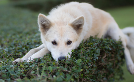 companions: Portrait of a young white dog sleeping on tree at  park Stock Photo