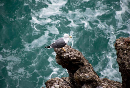 volatile: seagull on the rock above the sea water