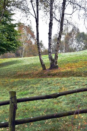 beyond the wooden fence, a beautiful green lawn