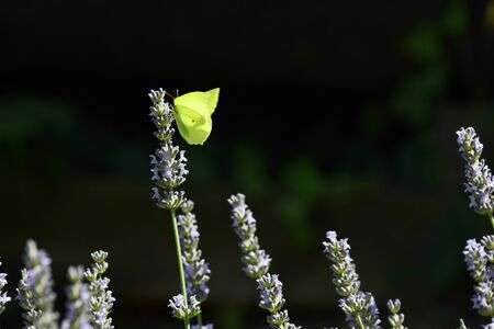 The beautiful butterfly, searching for food on the flowers in the garden Stok Fotoğraf