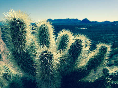 maintains: Cactus with the Arizona desert and maintains  Stock Photo