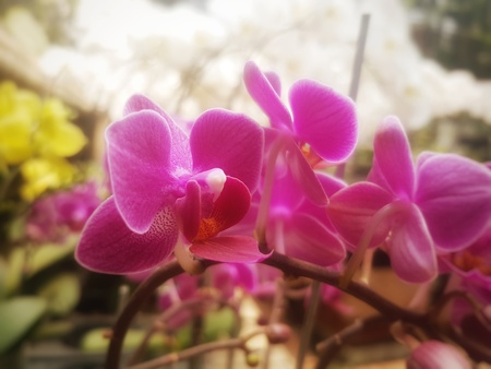 this flower so beautifull Banco de Imagens