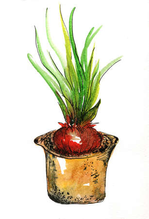 onions in a pot color illustration graphics Stock Photo