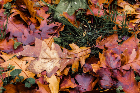 texture of oak leaves in autumn Stock Photo - 25042483