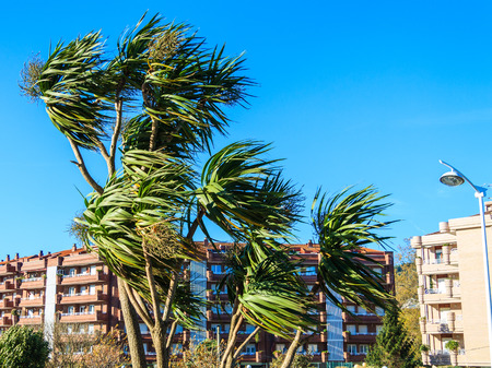 Wind photography on palm trees in one day in hurricane 版權商用圖片
