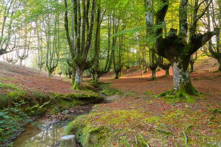 Forest Otzarreta