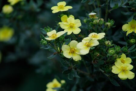Little yellow flowers in the autumn garden. Autumn floral arrangement, fall concept, copy space on natural background Standard-Bild - 129251084