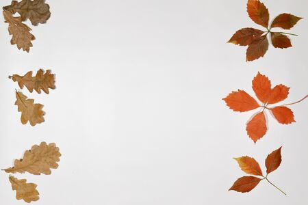 Autumn card of colored falling leafs isolated on white background Reklamní fotografie