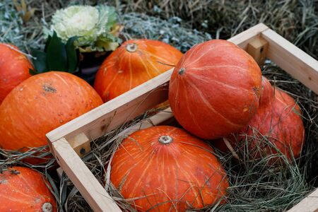 Orange pumpkins in a wooden box and laid out on dry grass - Thanksgiving and autumn background Stock Photo