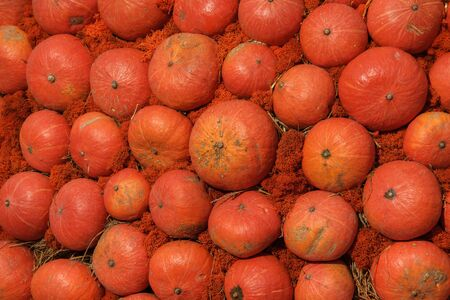 orange pumpkins of various shapes and sizes are laid out in a row - the background for Thanksgiving, Halloween and autumn.