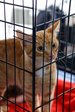 The kitten from the animal shelter peeps out from behind the bars and expects to find a good owner. The concept of humanity, kindness, friendship.