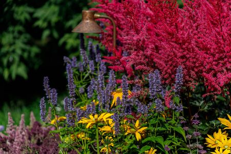 Colorful floral decorations. Floral background. Pink astilbes, yellow coreopsis, purple and blue flowers are gathered together in a flower bed
