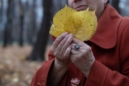 Hands of an elderly woman holding yellow autumn leaves Archivio Fotografico - 134806932