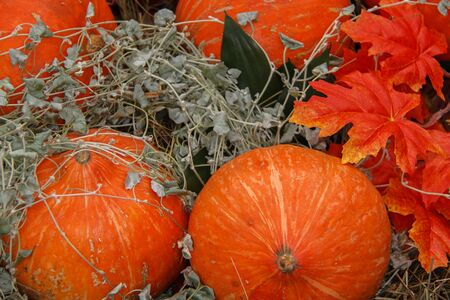lots of pumpkins at outdoor farmer's market, autumn pumpkin decor for thanksgiving