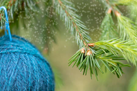 Christmas background with balls of yarn. Blue woolen ball hanging on the green branches of a Christmas tree. Horizontal poster with copy space. The concept of a winter gift, present for handwork