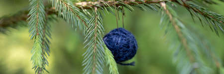 Christmas background with balls of yarn. Blue woolen ball hanging on the green branches of a Christmas tree. Horizontal banner with copy space. The concept of a winter gift, present for handwork