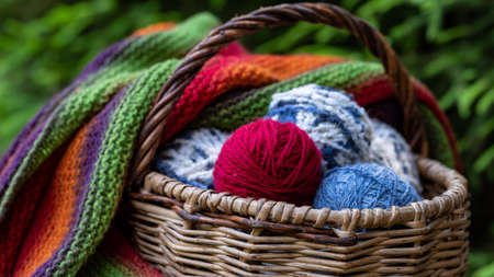 Multi-colored balls of knitting yarn in a basket on a background of green branches of spruce. Horizontal poster with copy space. Yarn for knitting.