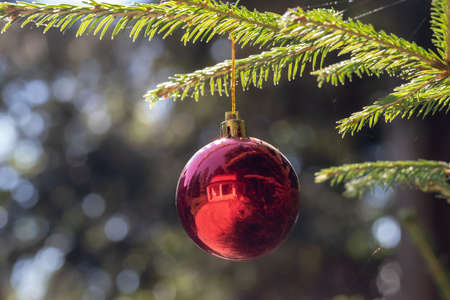 Red Christmas ball hanging on Christmas tree. Xmas theme with space for text