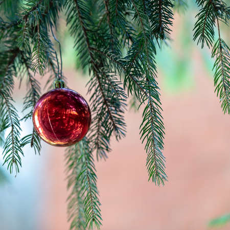 Red Christmas ball hanging on Christmas tree. Xmas theme with space for text 免版税图像