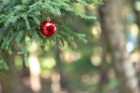 Christmas decoration, bauble ball hanging on fir tree over abstract bokeh background, selective focus