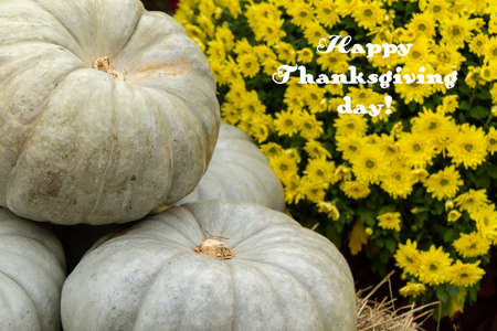 happy thanksgiving text sign on autumn pumpkin background, place for text, seasonal greetings, autumn holidays, harvest time, cozy mood