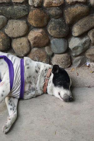 cansancio: perro durmiendo