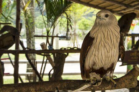 bird of prey: hawk bird of prey hunting pet Stock Photo