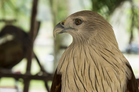 hawk bird of prey hunting pet Imagens