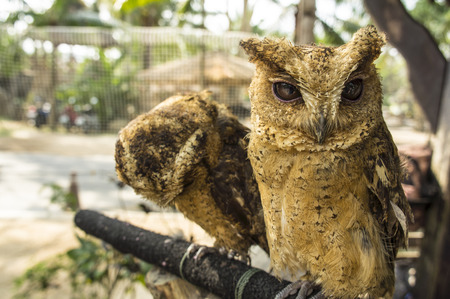 rear end: owl little small staring