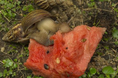 babosa: babosa caracol hierba lenta naturaleza primer plano de tierra