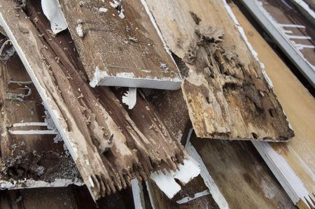 termite damage rotten wood eat nest destroy 写真素材