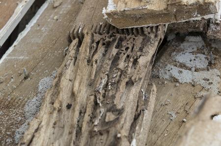 흰개미 피해 썩은 나무 둥지가 파괴 먹고