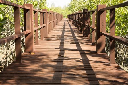walkway: sunlight walkway walk wooden beach tour Stock Photo