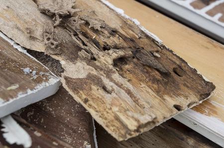 destroy: termite damage rotten wood eat nest destroy Stock Photo