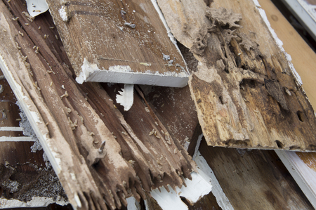 damage control: termite damage rotten wood eat nest destroy Stock Photo