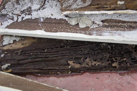 drywood: termite damage rotten wood eat nest destroy Stock Photo
