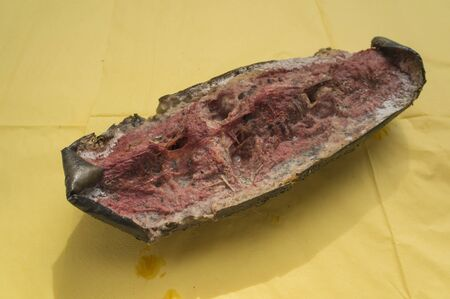 bad smell: rotten watermelon bad smell mold nature