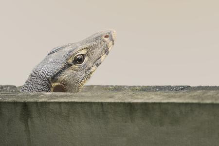 wall work path reptile animal home lizard Stock Photo