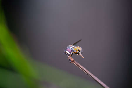 A small honey bee on the top of grass leaf