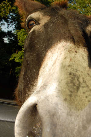 extreme angle: extreme angle of a donkeys nose and face