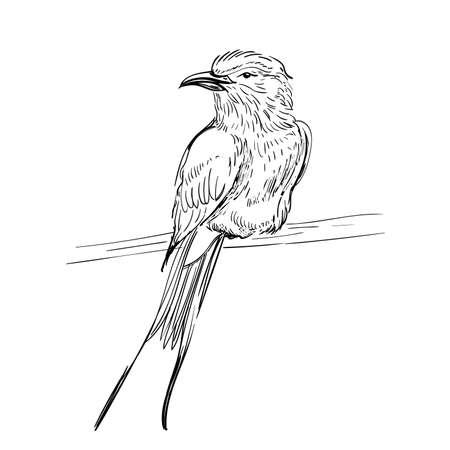 vectorillustratie. Schets vogels. Inkt tocht vogel. Graveren van vogels. Zwart en wit. Geïsoleerd op een witte achtergrond. Kleine pieper.