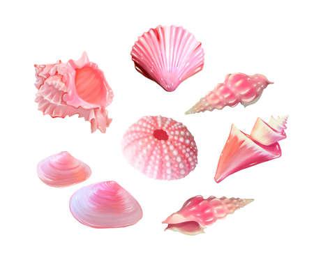 set of Pink seashells. Vector illustration. Under the sea. Underwater purple life. pink urchin. Mollusc. - Vector illustration