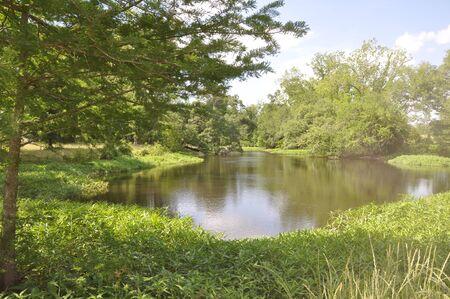 조용한 연못