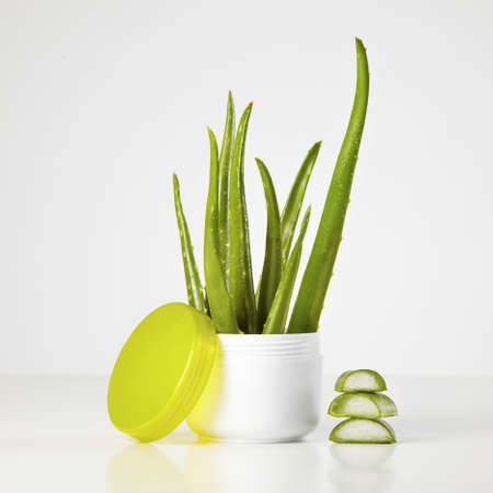 aloe vera on a white background