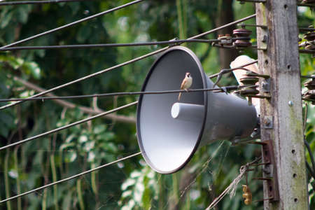 proclaim: A public relation horn speaker