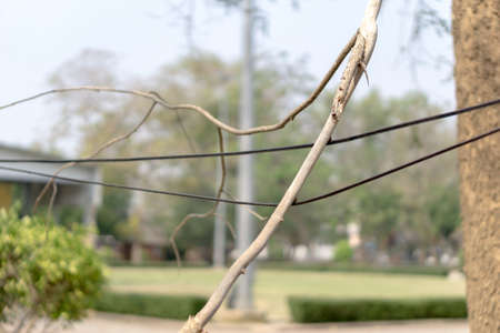 outage power: Dry tree branch falls on power line Stock Photo