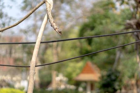tree line: Dry tree branch falls on power line Stock Photo