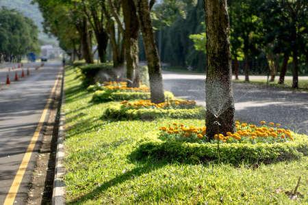 water sprinkler: Water sprinkler in Thai University