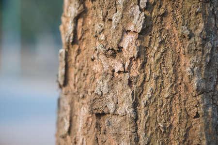 buch: Close up of tree bark