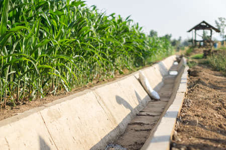 Dried water channel at drought corn field,